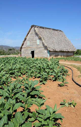 Tobacco barn in Cuba