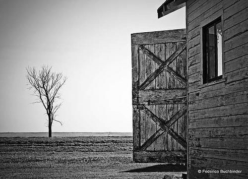 B/W Photo Of Shed Door And Tree